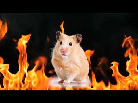 hamsterfire